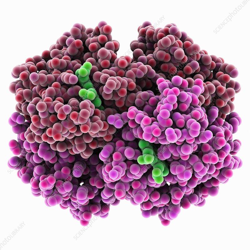 Carboxyhaemoglobin molecule