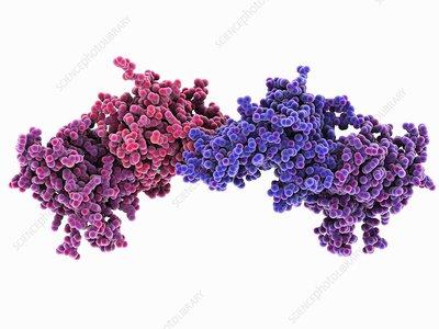 DNA methyltransferase molecule