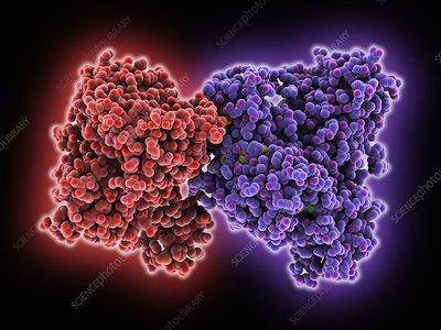 Isocitrate dehydrogenase kinase