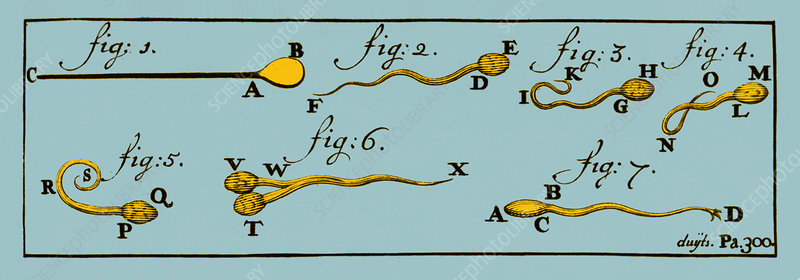 Engraving of Sperm Cells, 1707