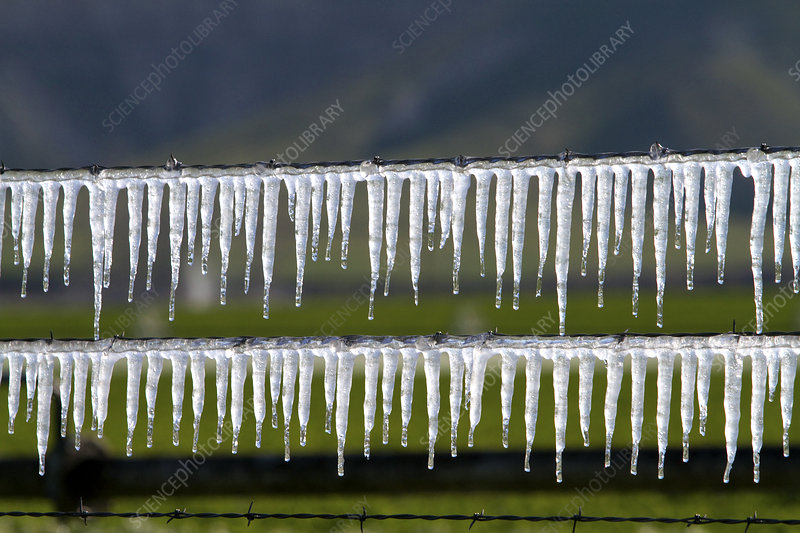 Frozen irrigation water on a wire fence