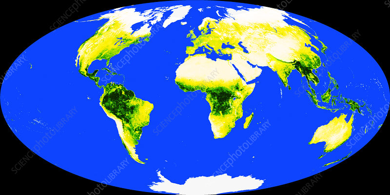 World Map With Tropical Rainforests Stock Image C025 3457