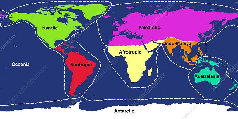 The Ecozones of the World