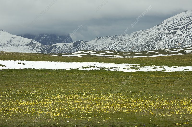 Wildflowers on Campo Imperatore, Italy