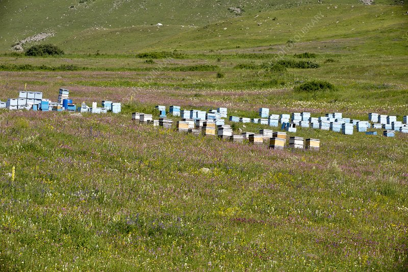 Bee hives in grassland, Turkey