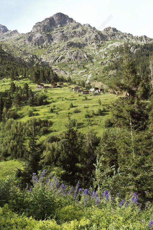 High mountain pastures, Turkey