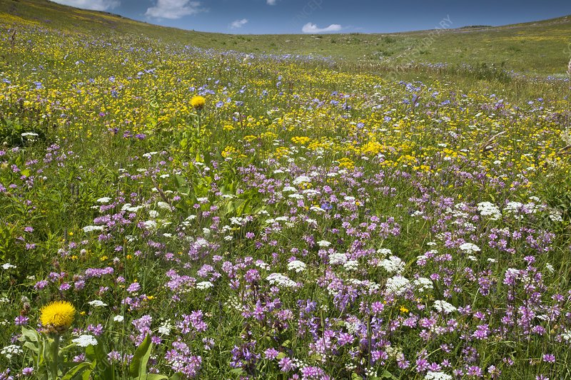 Wildflowers on a mountainside