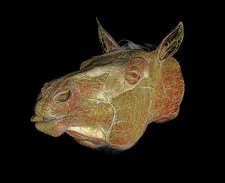 Horse's head, CT scan