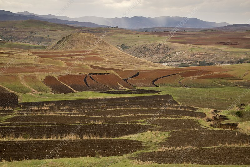 Terraced fields, Lesotho