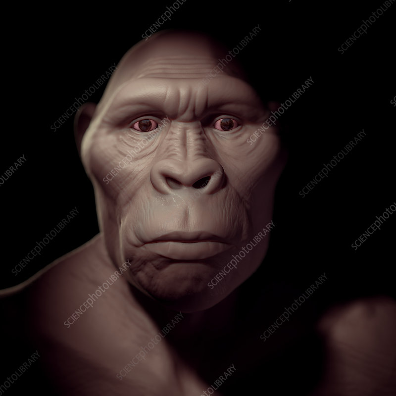 Australopithecus, illustration