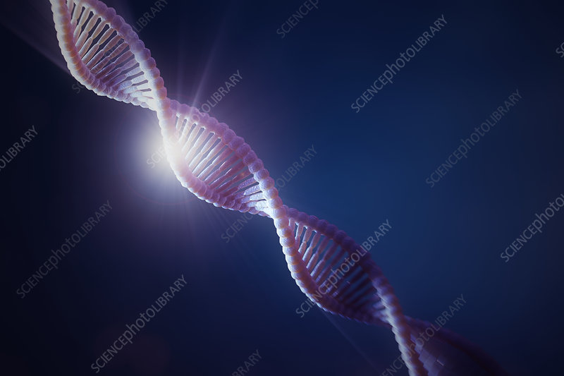 DNA Structure, illustration