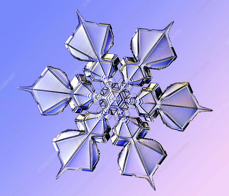 Snowflake, light micrograph