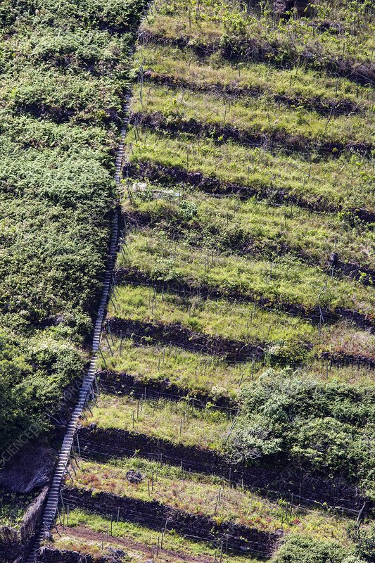 Terraced fields in Madeira