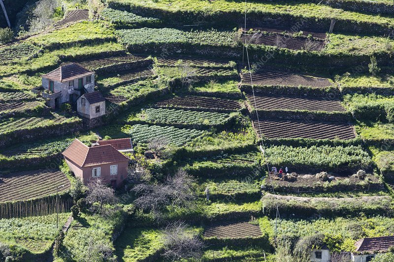 Terraced fields and farmhouses stock image c025 6083 for Terrace farming model