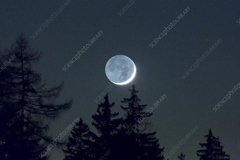 Earthlight >> Moon With Earthlight And Trees Stock Image C025 6090 Science
