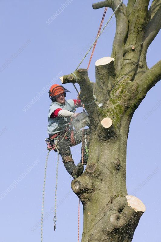 A tree surgeon chopping a tree down