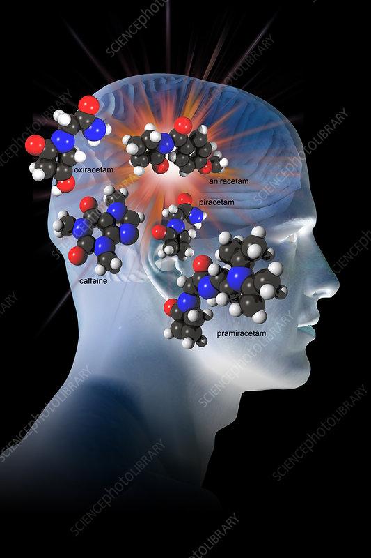 Brain development adulthood image 4