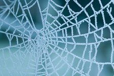 Frozen spiders web