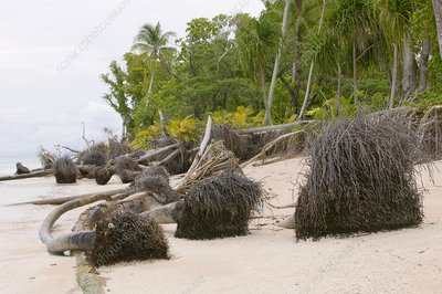 Trees knocked down on Tuvalu