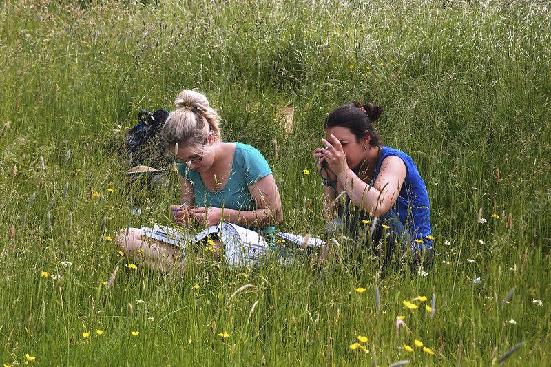 Meadow plant identification