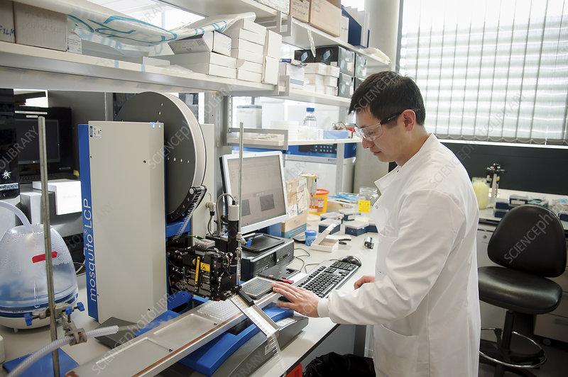 Geneticist screening protein crystals