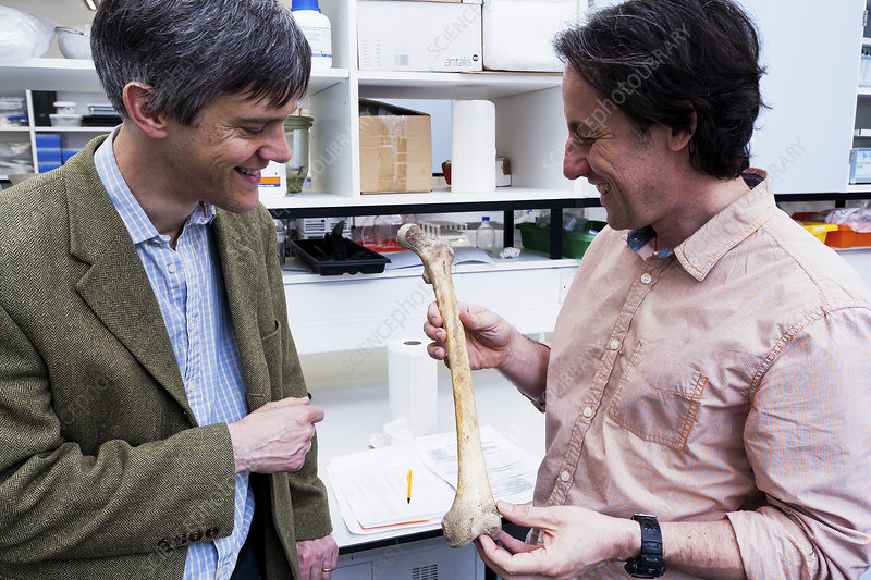 Archaeologists holding a human bone