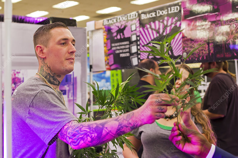 Marijuana trade show cultivation samples
