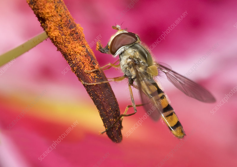 Marmalade icon hover-fly
