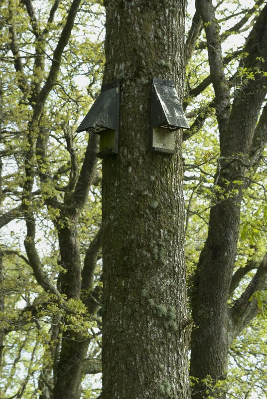 Bat boxes on trees