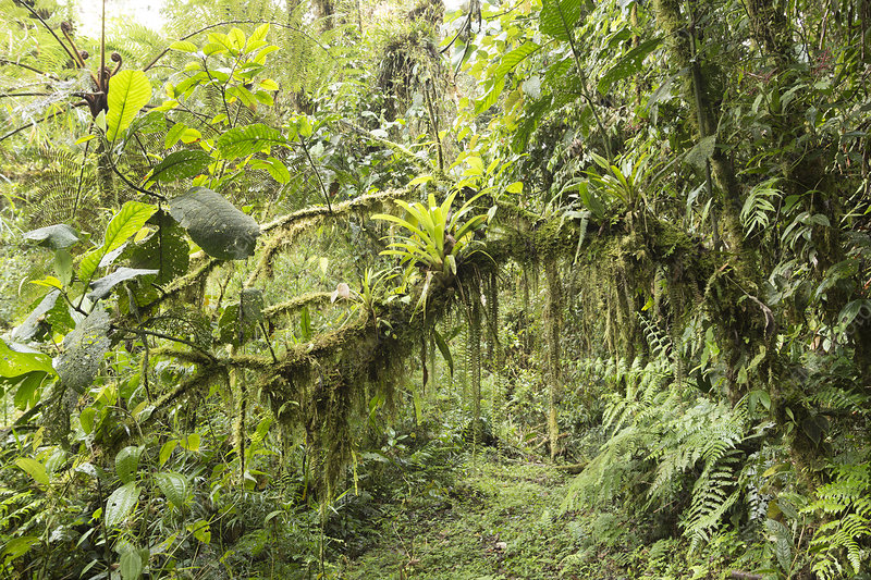 Amazonian cloud forest