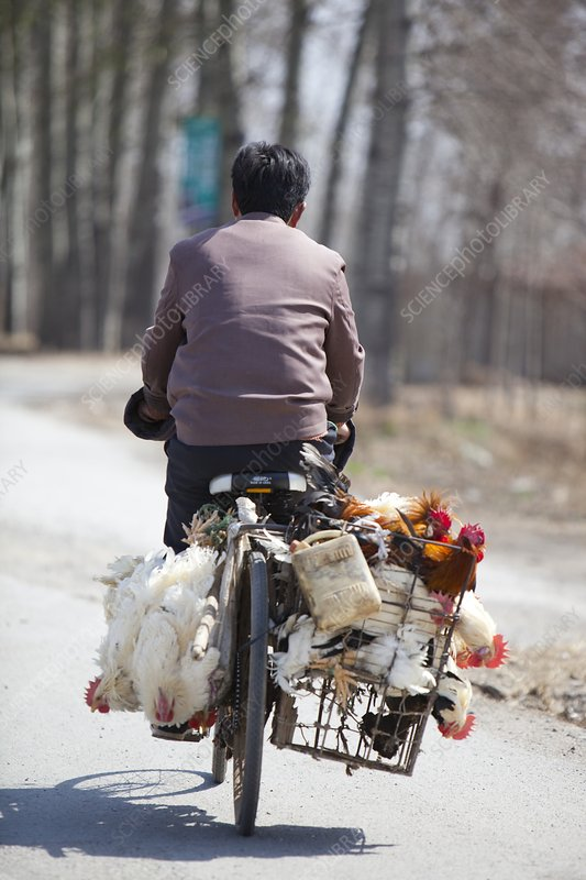 Man and chickens on a bike, China