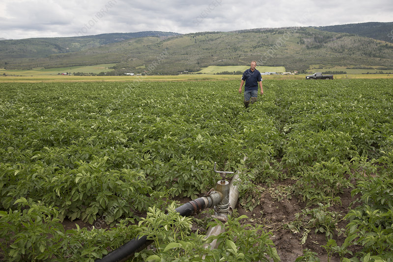 Potato farming, Idaho, USA