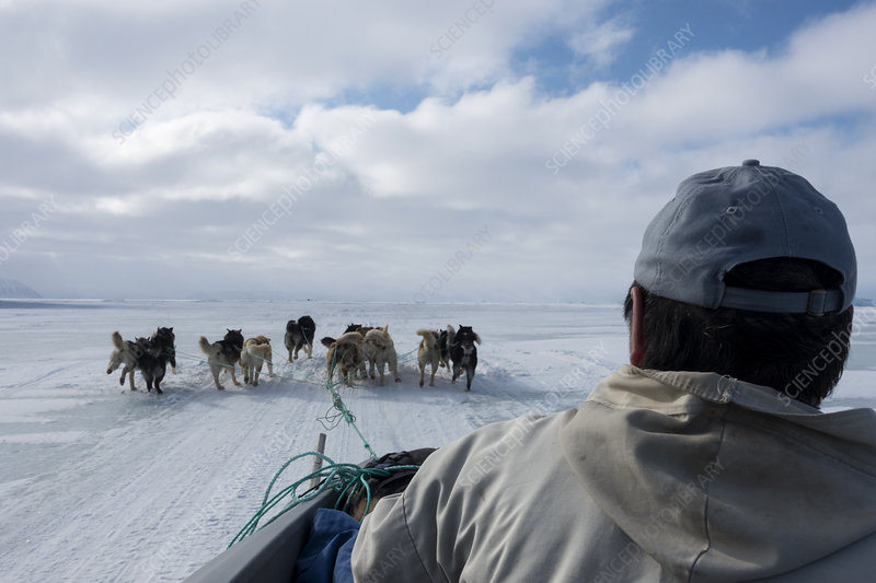 Inuit hunter and husky dog team