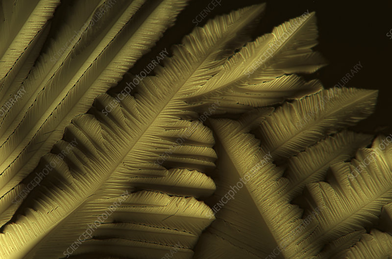 Citric acid crystals, light micrograph