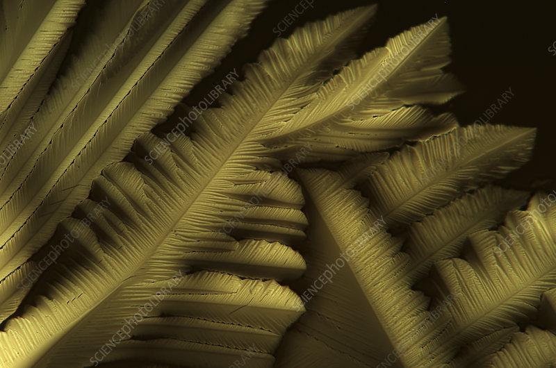 Citric acid crystals, light micrograph
