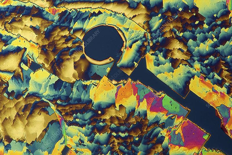 Vitamin B6 crystals, light micrograph