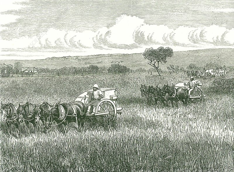 Horse-drawn mechanical harvesters