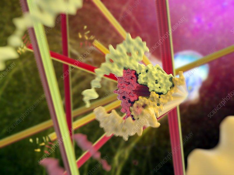 Alzheimer's beta-amyloid fibrils
