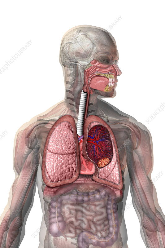 Lung Cancer, illustration