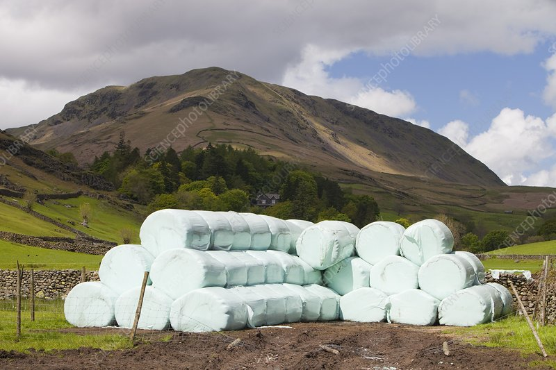 Bags of silage on a farm