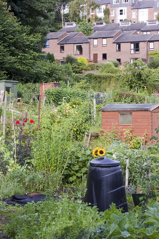 Allotments, UK