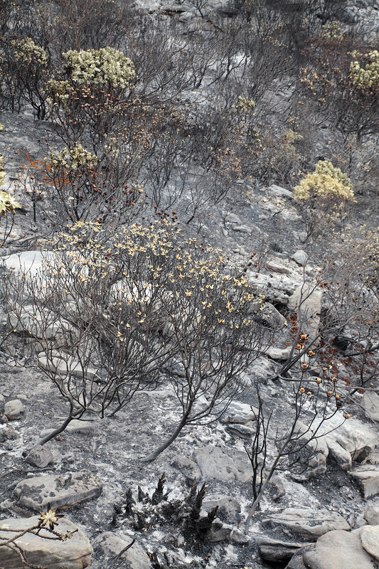 Fire damage in a nature reserve