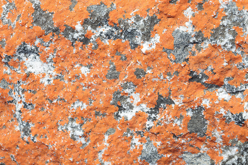 Orange lichen on sandstone