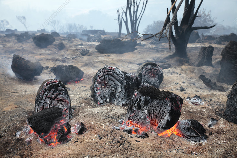 Smouldering scrubland after wildfire