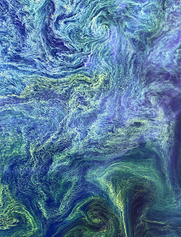 Cyanobacteria bloom, satellite image