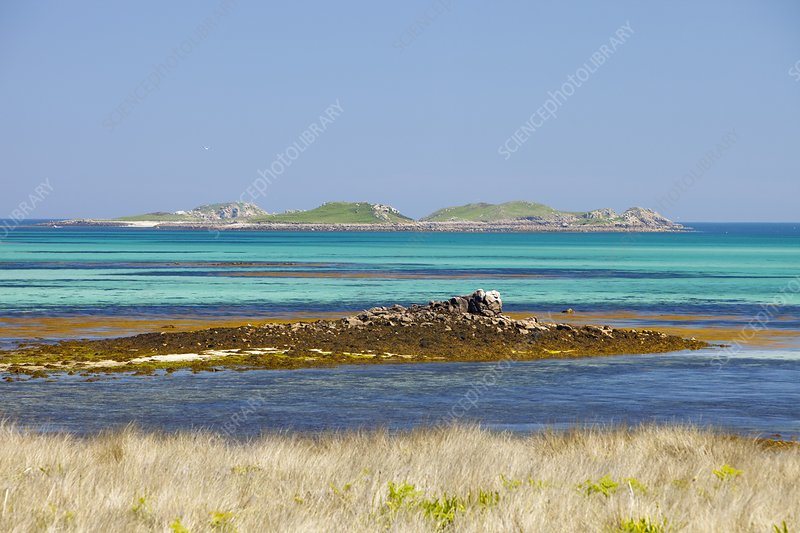 Tresco, Scilly Isles, UK