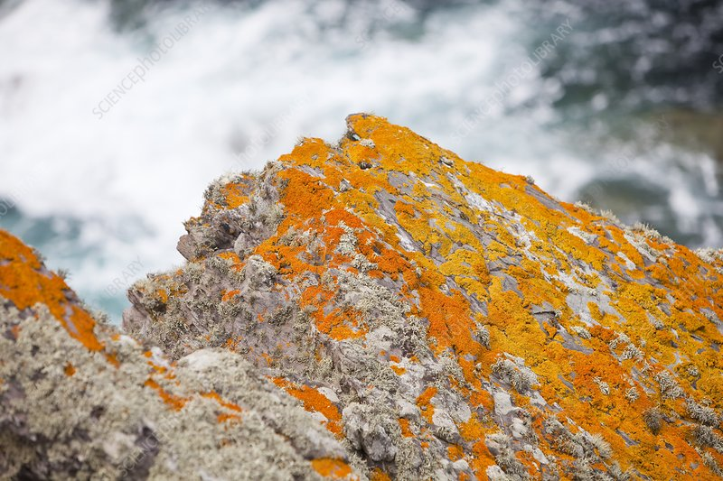 Lichen on a rock near St Just