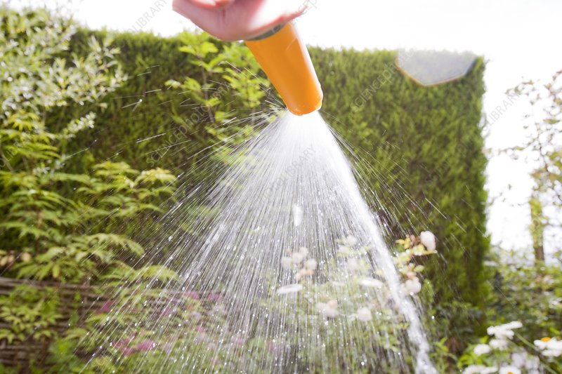 Watering with a garden hose