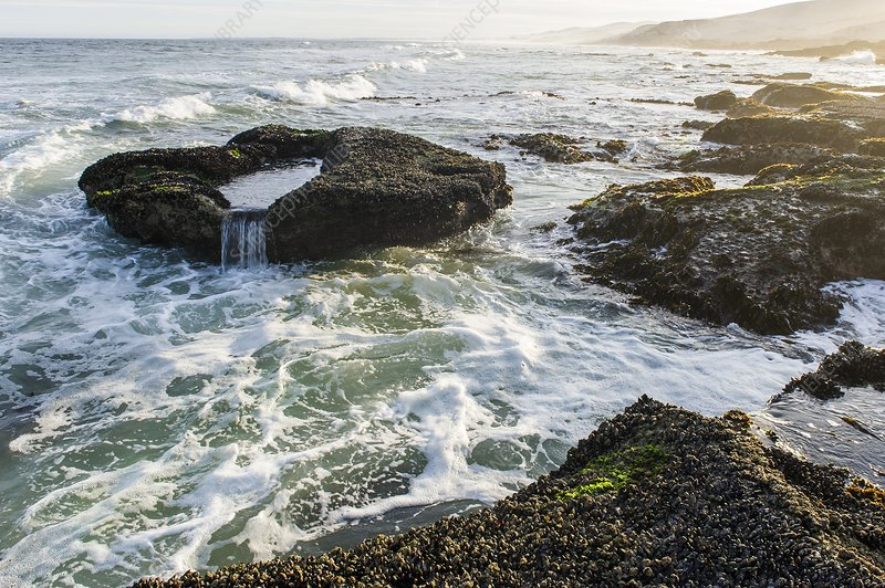 Intertidal zone impacted by wave action