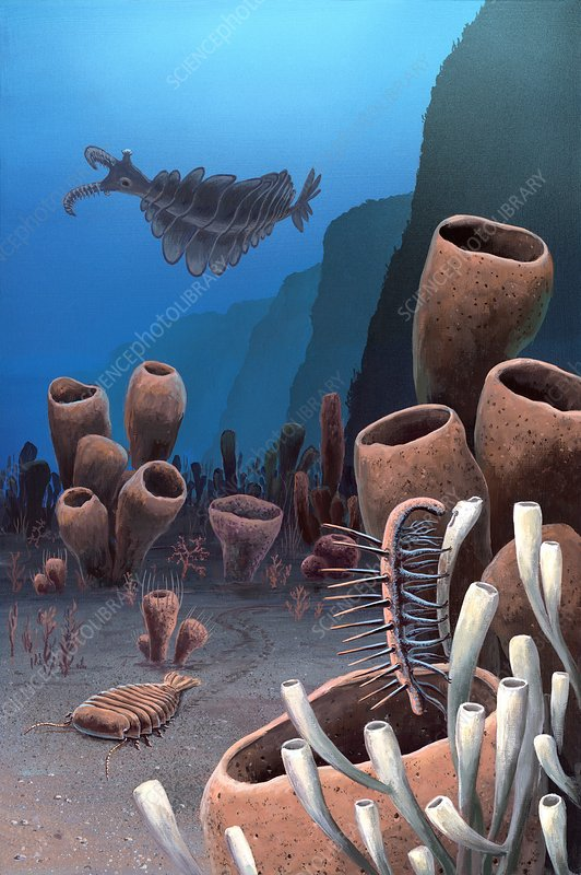 Burgess shale, illustration